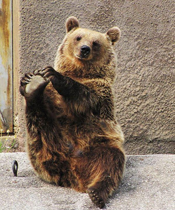 funny-yoga-bear-007.jpg